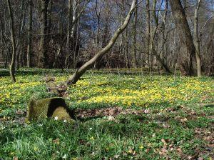 Mato, na primavera, no parque ao lado do lago Furesø